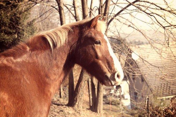 L'homme n'aura jamais la perfection du cheval. ♥