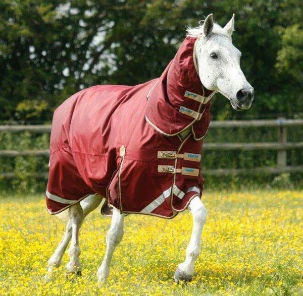 Coucou les fanous je continue la présentation de nos chevaux du centre équestre alors aujourd'hui voici Ange ces photos ont été  prises il y a quelques mois mais elle n a pas tellement changer vous savez sinon brave comme tout il est possible de faire toute sorte avec elle elle a déjà fait bcp de concours et est formidable #kate