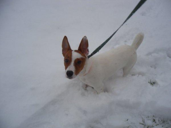 hazard dans la neige