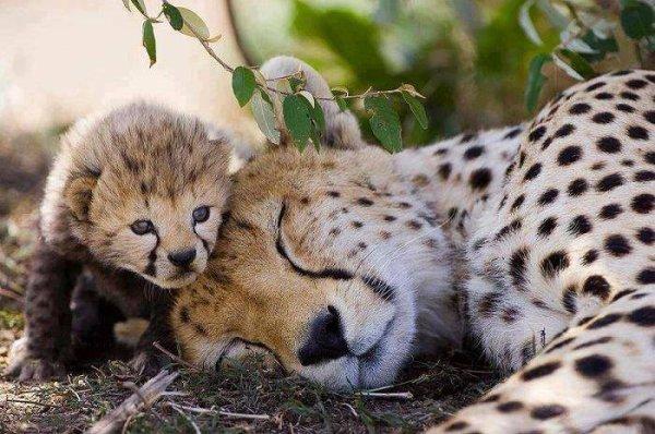 ¡Qué hermosa la maternidad