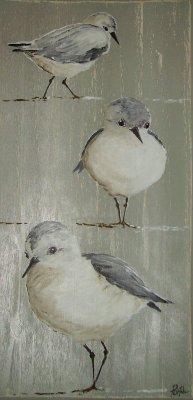 """""""Les bécasseaux sanderlings"""""""
