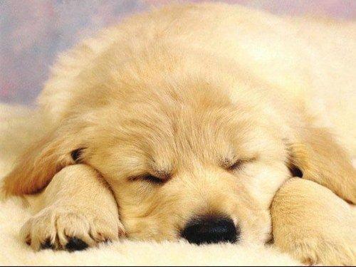 ceci et pour une personne qui aime les chiensss