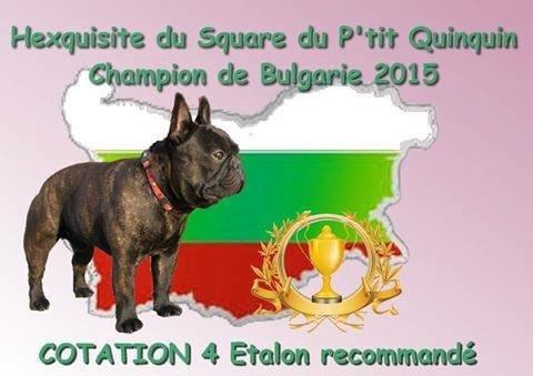Hexquisite Du Square Du P'tit Quinquin : CHAMPION DE BULGARIE 2015