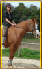 Votre cheval vous ressemble Tel votre reflet dans un Miroir - ♥