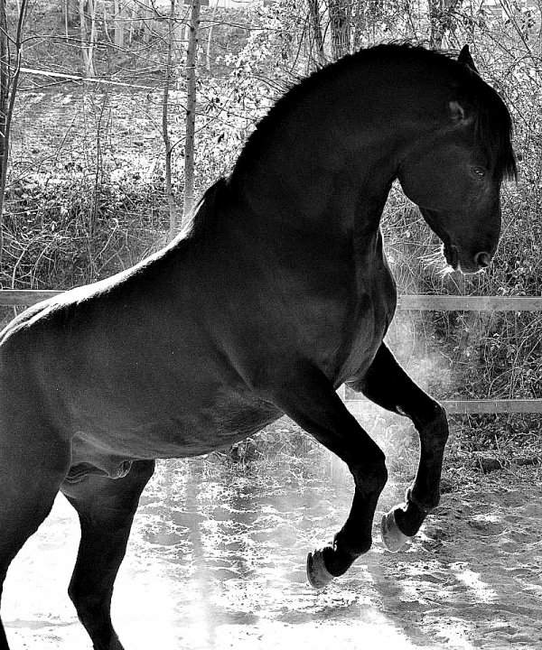 Equitatioon ♥.