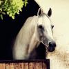 Disney-Horse