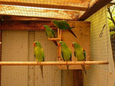 Swifts 2011 : couple V6 et leurs 3 jeunes