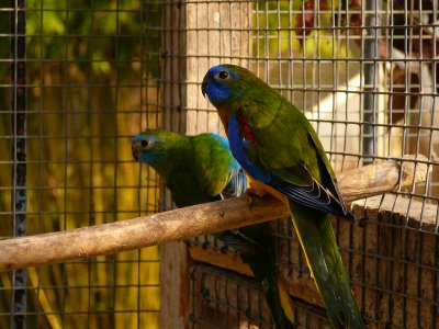 Turquoisines suite... M. V2 Vert foncé, Violet ou pas ?