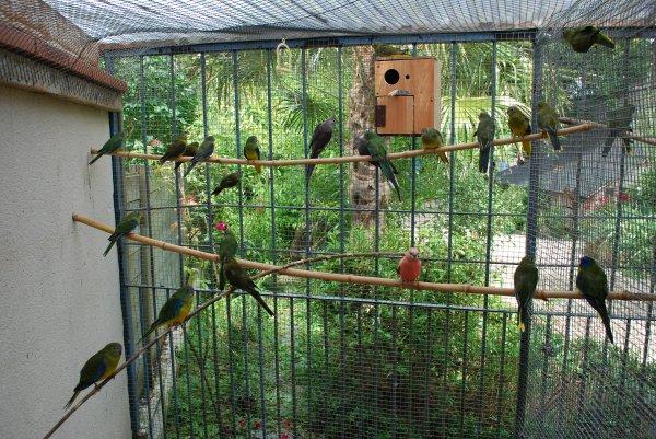 Turquoisines Ventre Jaune nées en Anjou été 2013