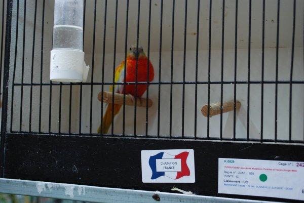 FFO Euphèmes 5 : Turquoisines ventre rouge