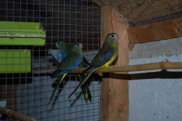 Suite Photos Turquoisines VJ ...