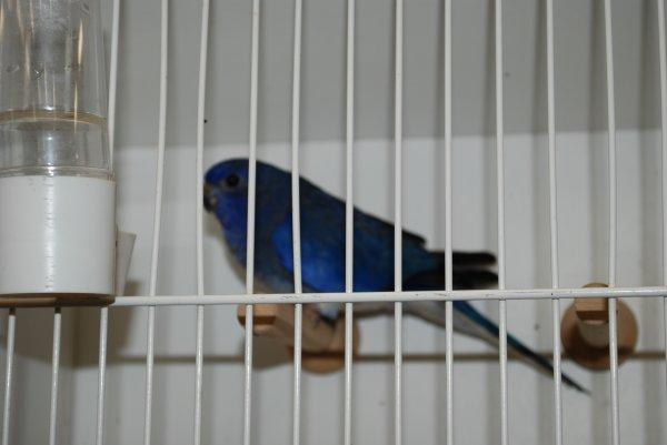 CF CDE 14 : Suite euphèmes : Splendide Bleue Violet