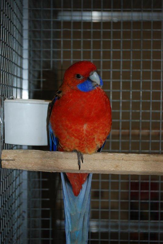 CF CDE 14 : Platycerques et quelques oiseaux rares...