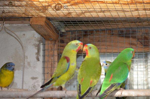 Dernier tri : encore quelques oiseaux à céder