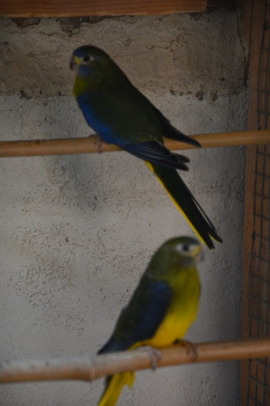 Oiseaux à céder : un premier tri est en cours... :)