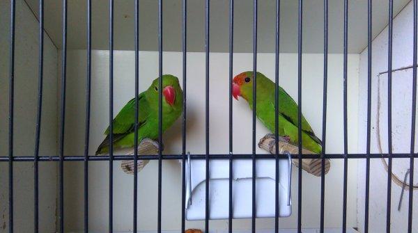 Oiseaux à céder, mi-juin 2019