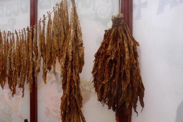 la Société Historique d'Illies visite le Musée du Tabac à Wervik