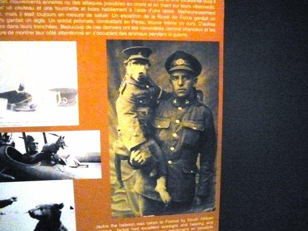 Mademoiselle from Armentières expose les animaux de la Grande Guerre