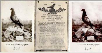 Les pigeons voyageurs dans la Grande Guerre
