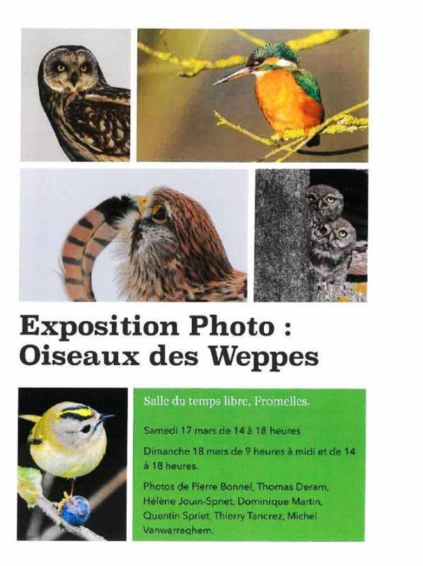 Ce week-end, découvrez les oiseaux du pays de Weppes à Fromelles