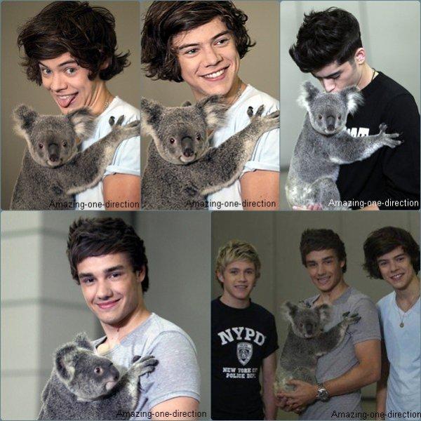 Les gars et un koala en Australie...♫