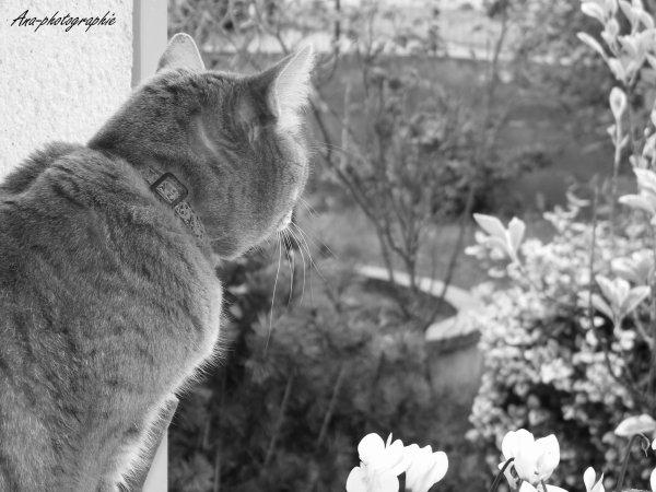 Le chat qui regardait la pluie tomber.