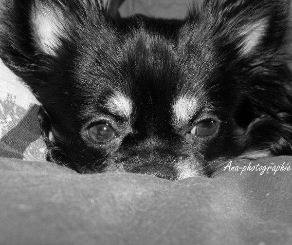 Ce que c'est fatiguant d'être un chien, surtout quand on s'appelle César.
