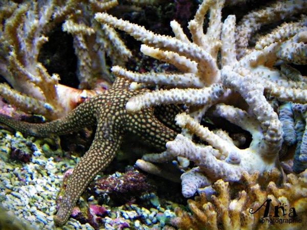Les fonds sous-marins par l'Océanopolis