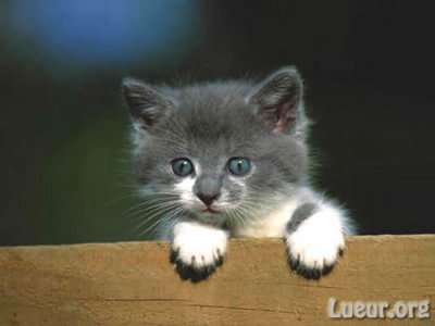 le petit chaton trop mimi