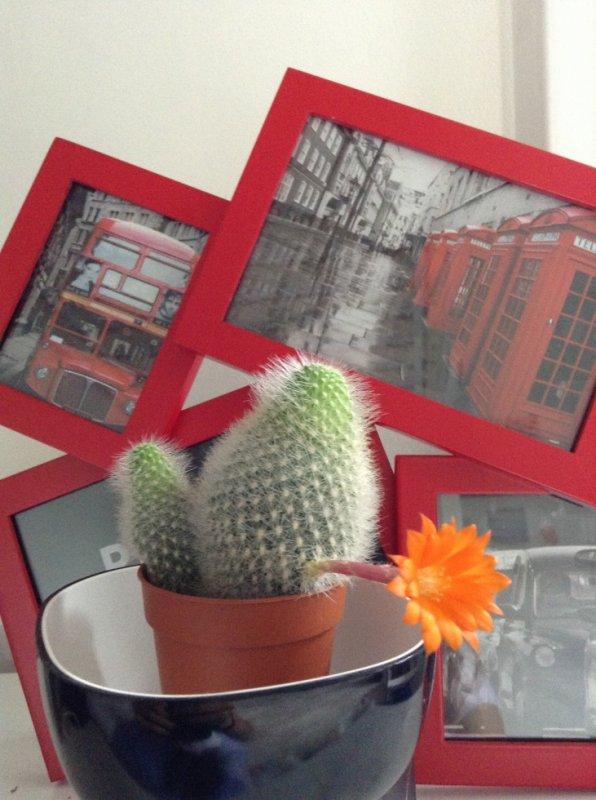 Même les cactus font des cadeaux !!!!