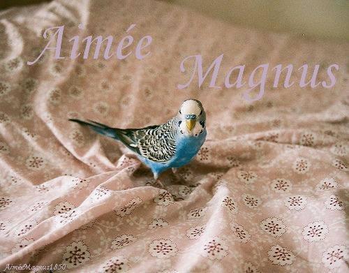 Présentation Aimée Magnus