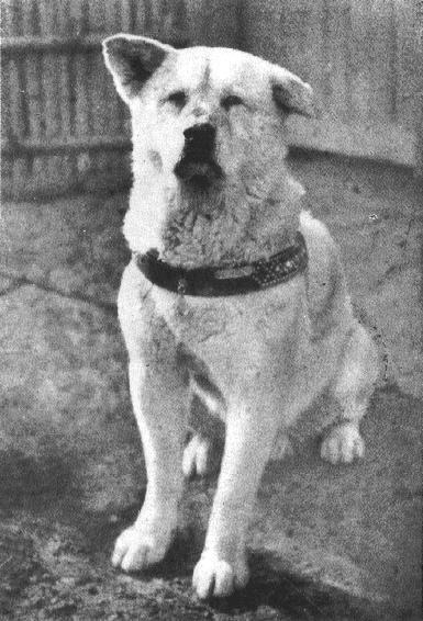 La légende d'Hachikô, une histoire vraie