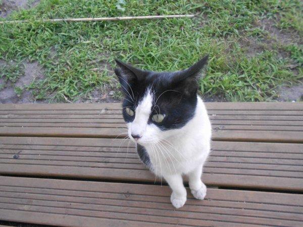 Mon chat Lily