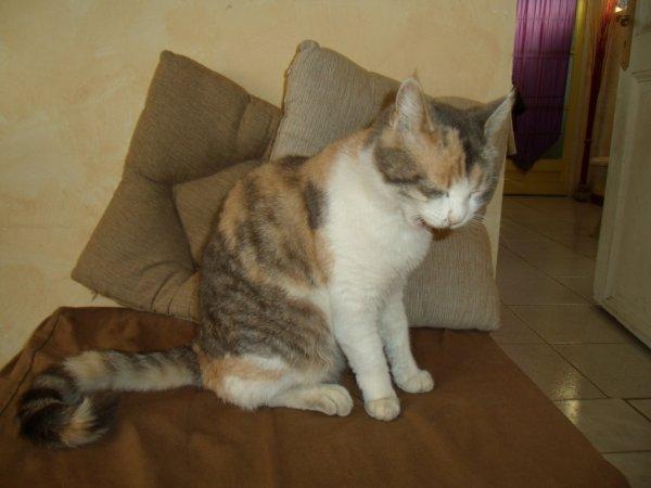 Mn 2eme chat Lola