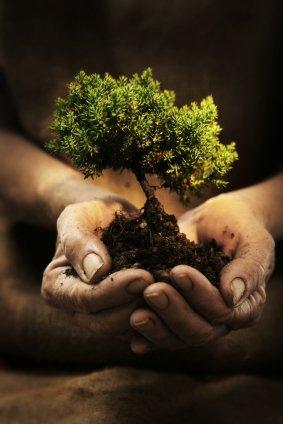 Economie - le débat décroissance/développement durable.
