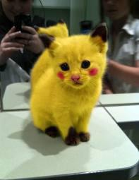 Vrai Pikachu