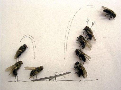 La vie de Skaramush, la reine auguste des mouches.