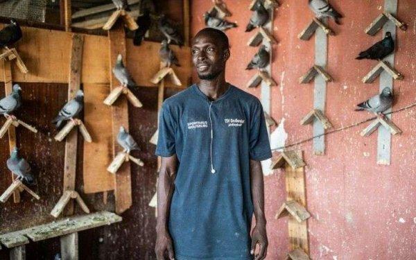 La colombophilie, nouvelle passion des jeunes Sénégalais