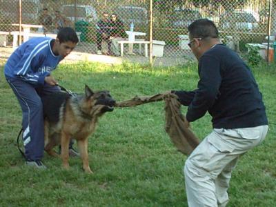 Blog de lesfreresintik - Page 3 - *Education canine