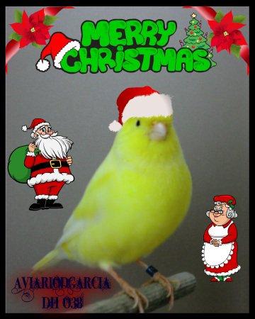 Merry Christmas-Feliz Navidad