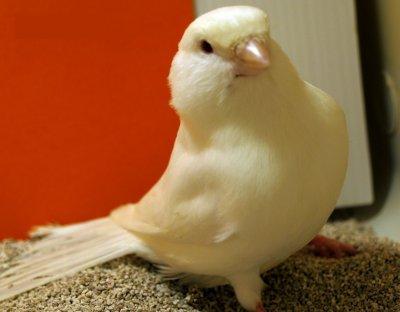 nueva adquisicion temporara 2012- macho albino