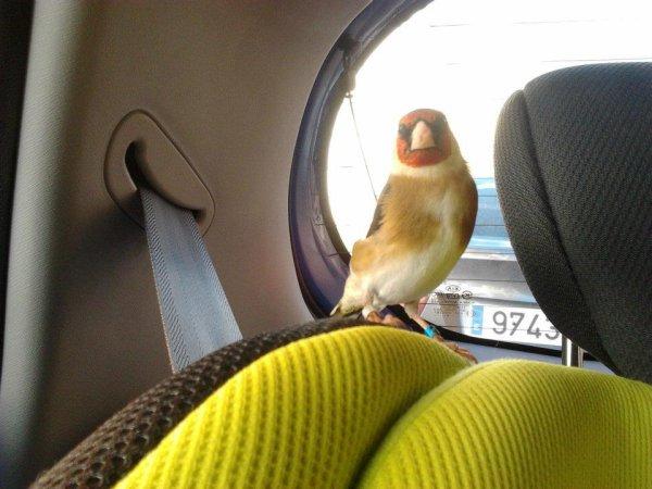 mi amigo PACO tiene un copiloto ni mas tranquilo ( con paciencia se puede conseguir todo )