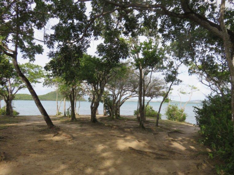215  Balade dans la mangrove...