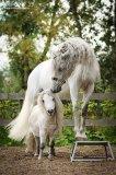 Photo de thehorse-un-mode-de-vie