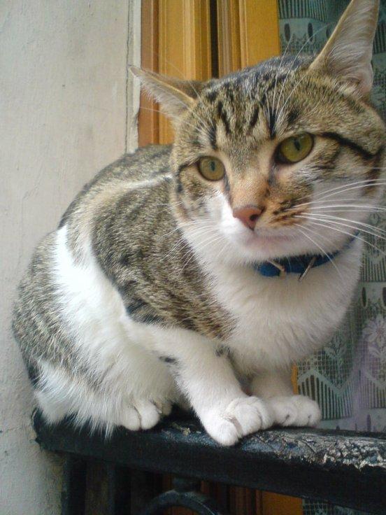 Trêfle Mon Chat !