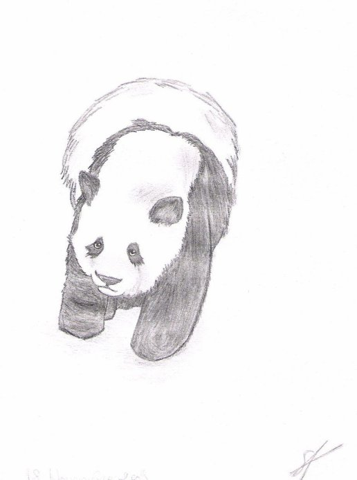 Pandi Panda !