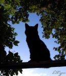 Photo de LaGuerreDesClans-chats