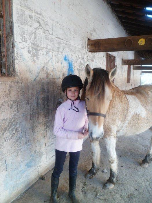 les chevaux top beau