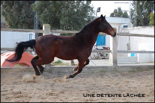 Ethologie: Une bonne détente pour un cheval bien dans ses basquettes !