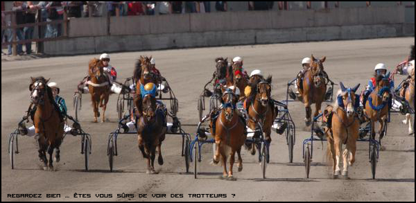 Le Trot Top Tour